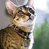 Cat Pet Medal