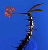 Flume - Skin Companion EP II