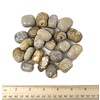 Fossilized Coral - Tumbled (1 lb parcel)