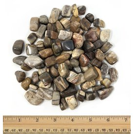 Petrified Wood - Tumbled Micro (1 lb parcel)