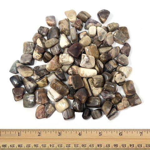 Petrified Wood - Tumbled Small (1 lb parcel)