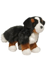 Douglas Douglas - ''Stevie'' Bernese Mountain Dog