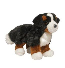 Douglas Douglas - ''Stevie'' Bernese Mountain Dog