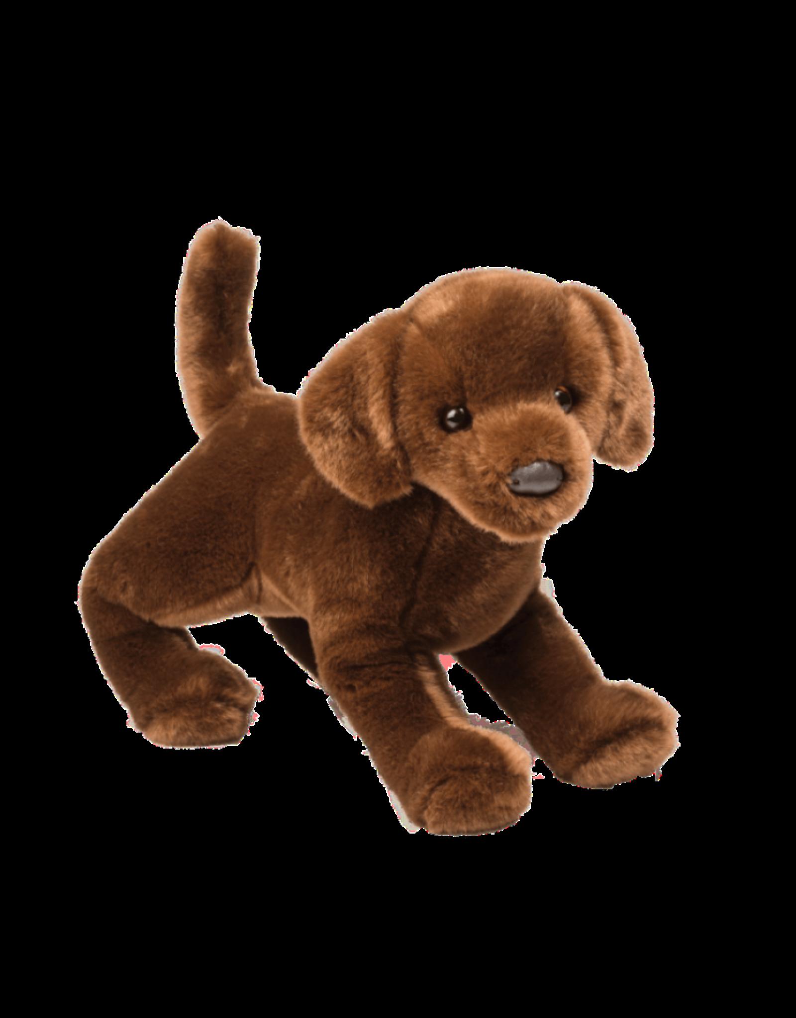 Douglas Douglas - ''Cocoa'' Chocolate Labrador