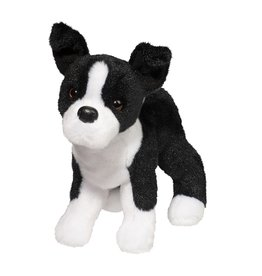 Douglas Douglas - ''Quincy'' Boston Terrier