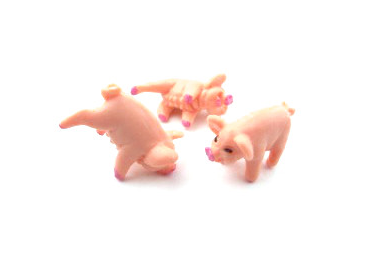 Tequila Pigs