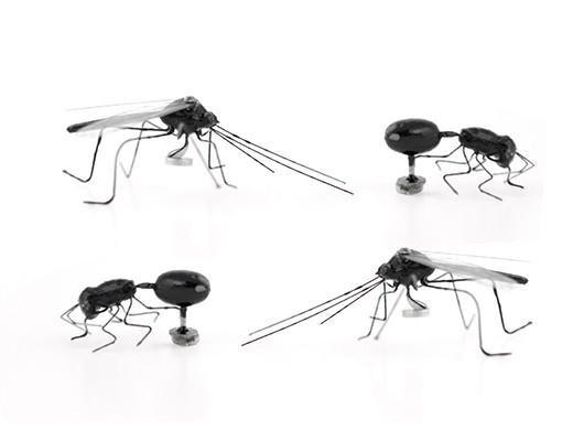 Kikkerland Kikkerland Insect magnets (set of 4)