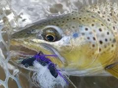 Choose The Best Dry Fly For The Situation