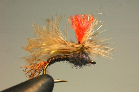 Caddis on the Brain in Montana