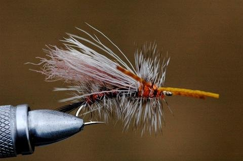 Fly of the week...Sexi Stimi