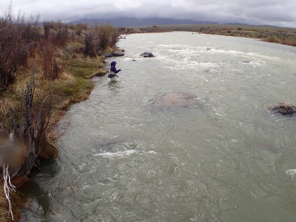 Water Releases from Hebgen Dam to Flush Madison River Sediments