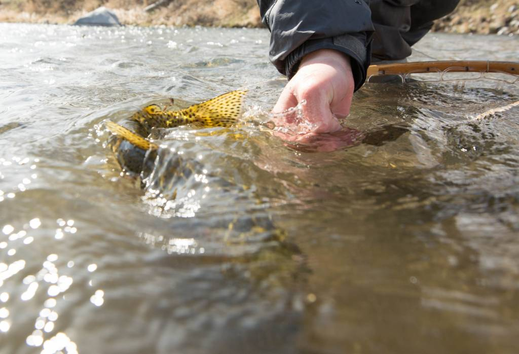 Montana Fly Fishing Tips from Gallatin River Guides