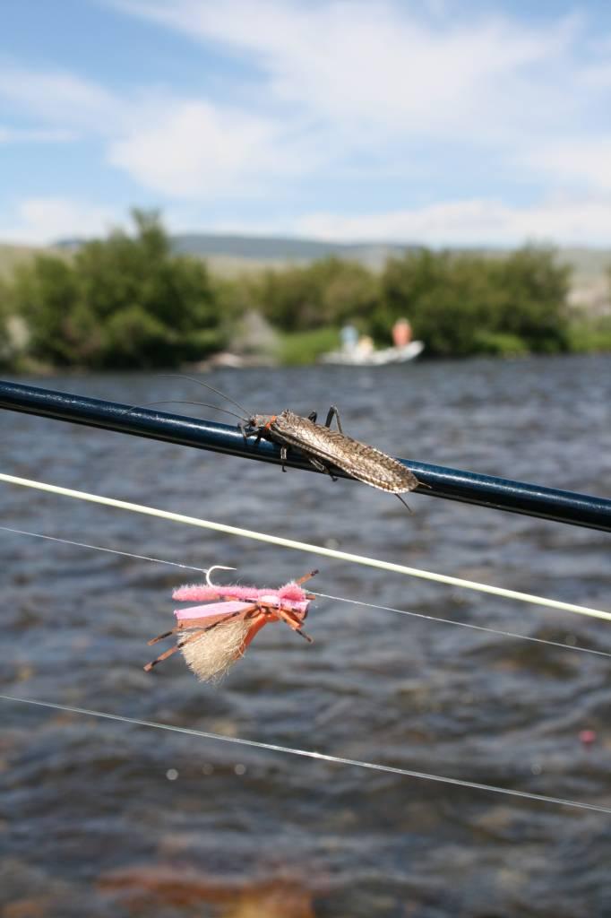 Montana Fly Fishing: Salmonfly Showdown