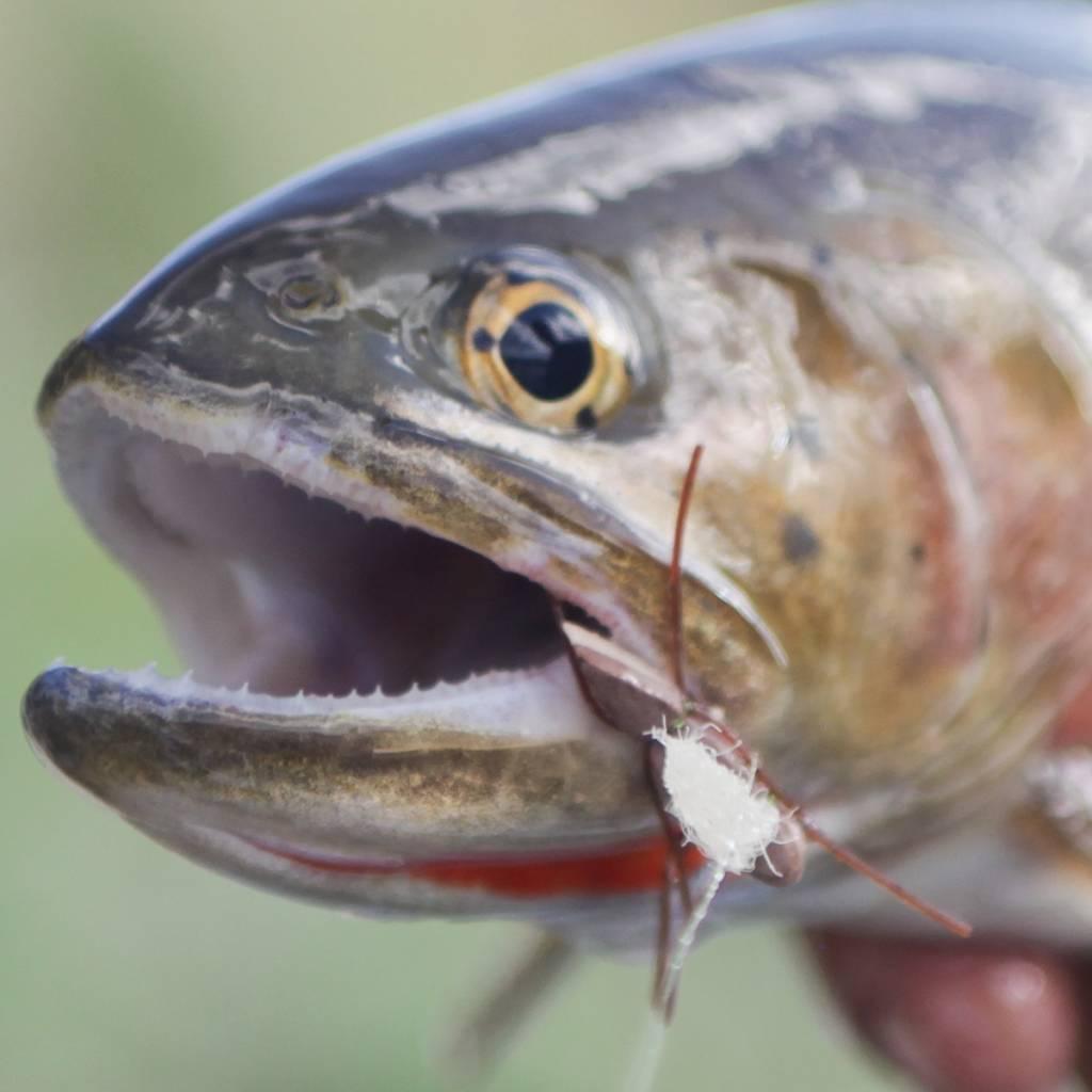 Fishing single dry flies