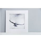 Great Grey Owl matted print