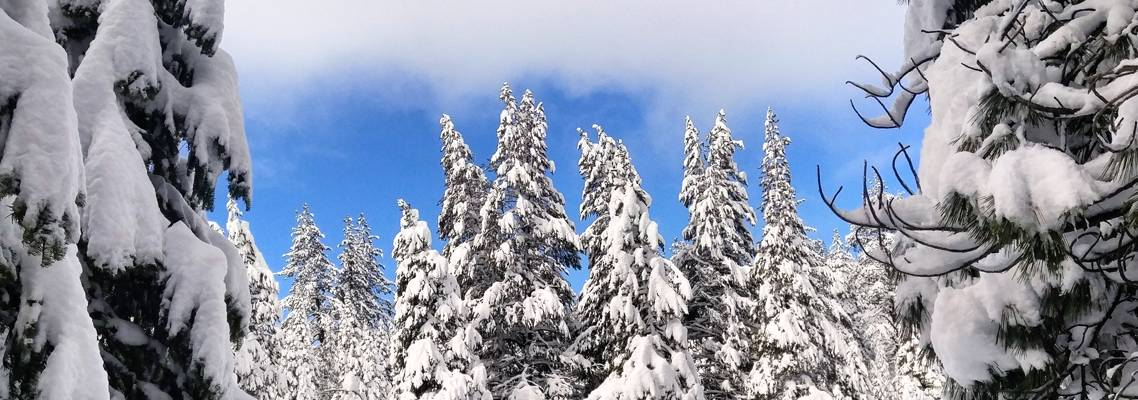Snowy Trees along the Truckee River Truckee Lifestyle Photo