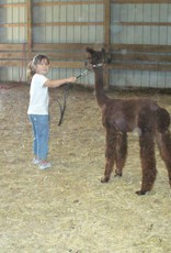 Alpaca Off Farm Activity