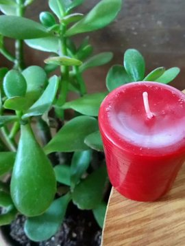 Cactus Creek Succulent Rose Votive Candle