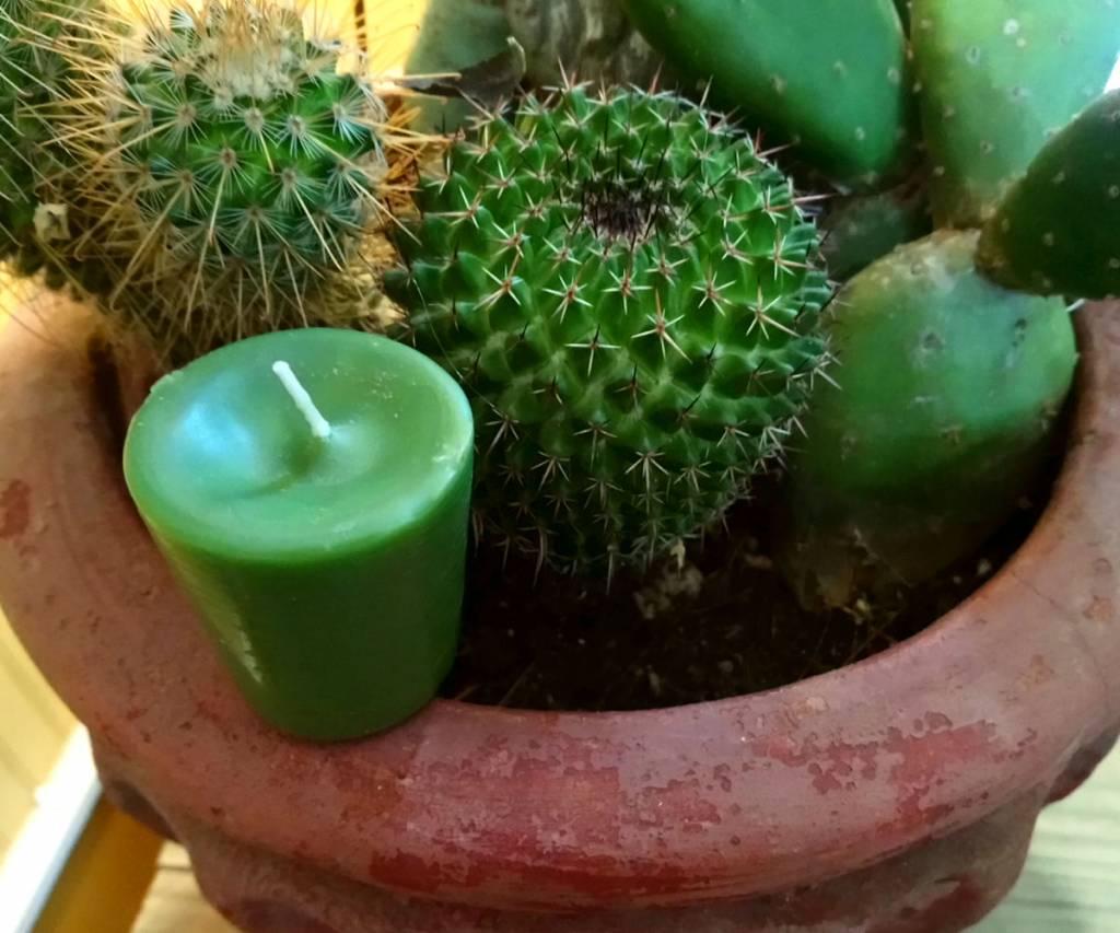 Cactus Flower Votive Candle