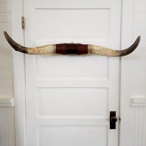 Texas Longhorn Rack