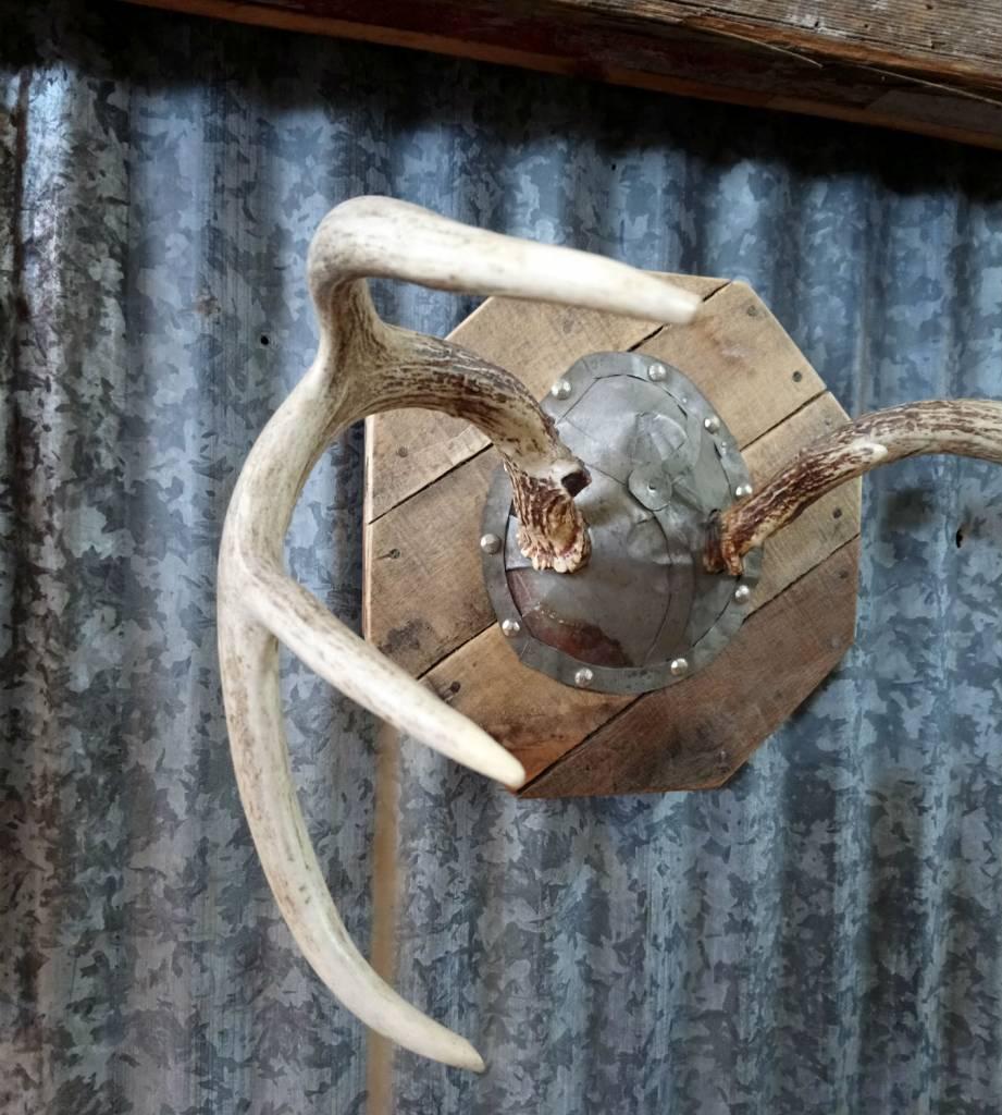 Antler+Metal Skull Mount