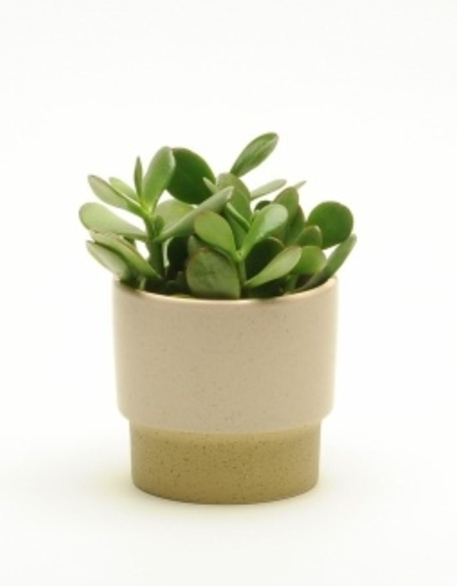 Blush Pink Pot (small)