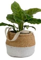Hanging Two Tone Basket Weave Cement Pot with Cotton Handle
