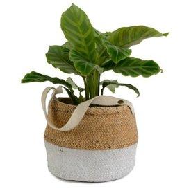 Pot panier tressé en ciment deux tons avec poignée en coton
