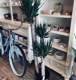 Yucca Cane 4'-3'-2'
