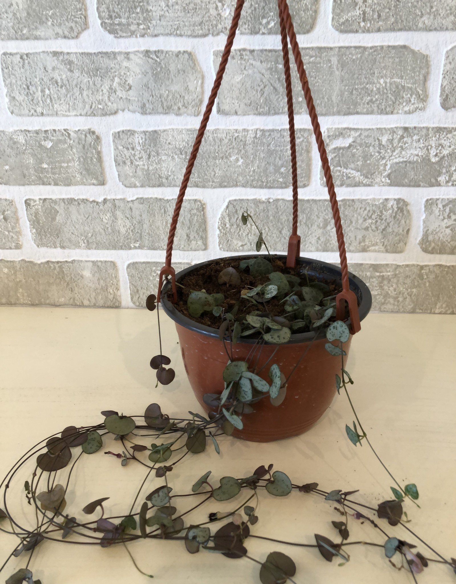 String of Hearts 6''