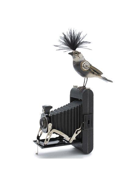 Mullanium Bird On Camera