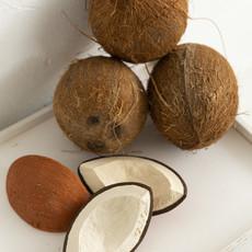 Oli & Carol Oli&Carol Coco the Coconut