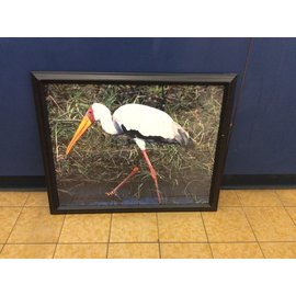 "18 1/4x22 1/4"" Framed animal print (3/23/2020)"