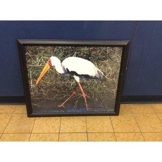 "18 1/4x22 1/4"" Framed animal print (3/23/2020)"