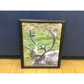 "22 1/4x18 1/4"" Framed animal print (3/23/2020)"