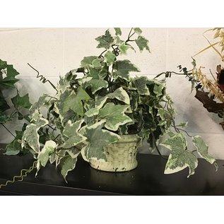 Artificial  plant in small ceramic planter (5/17/21)