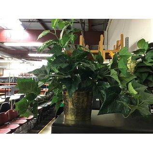 Artificial plant in medium brass planter (5/17/21)