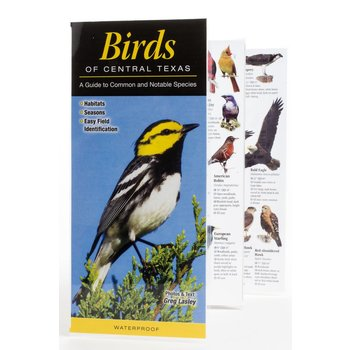 Austin & Texas Birds of Central Texas Guide PB