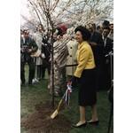 Lady Bird Lady Bird Planting Cherry Tree Postcard