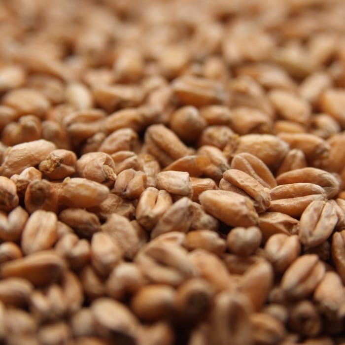 Weyermann Malt Type:Specialty<br /> Grain Origin:Germany<br /> Wort Color:2.1-2.8 °Lovibond (4.0-6.0 EBC)<br /> Protein:10.5-13.5%<br /> Moisture:5.5% max.<br /> Extract (dry):81.0% min.<br /> Diastatic Power:62 °Lintner min.<br /> Usage:80% max.<br /> Part of Weyermann&#039;s line of Terrior malts, Oak-Smoke