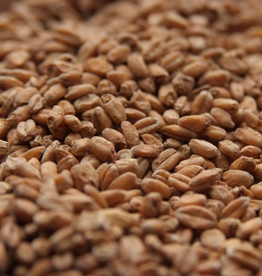 RAHR Rahr Red Wheat is a pale wheat malt made from North American hard spring red wheat. Pale wheat malt has the sweet malty flavor of other malted grains, but with a hint of fruitiness. Wheat malts are high in protein, which helps produce fuller-bodied beers.