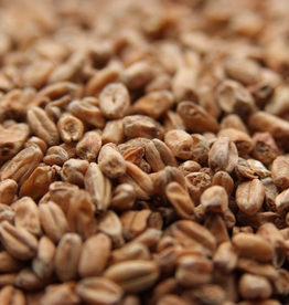 Weyermann Weyermann® Dark Wheat is a gently kilned malt made from high-quality German wheat. It contributes a mild golden color to wort and a robust malty-sweet flavor with notes of bread, biscuit, honey, toffee, and caramel. Wheat malts are high in protein, which