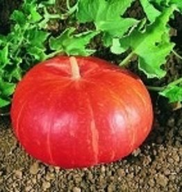 SEEDS Pumpkin, Organic Cinderella