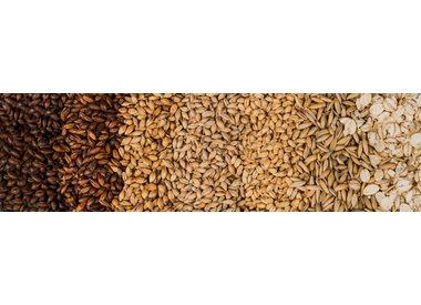 GRAINS & MALTS