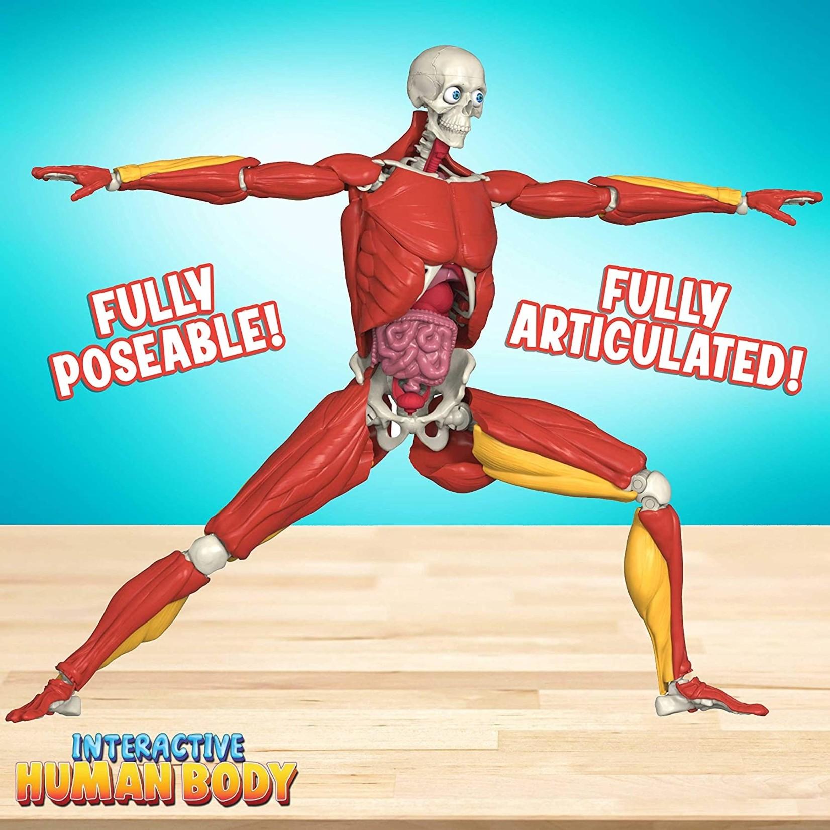 Be Amazing Interactive Human Body