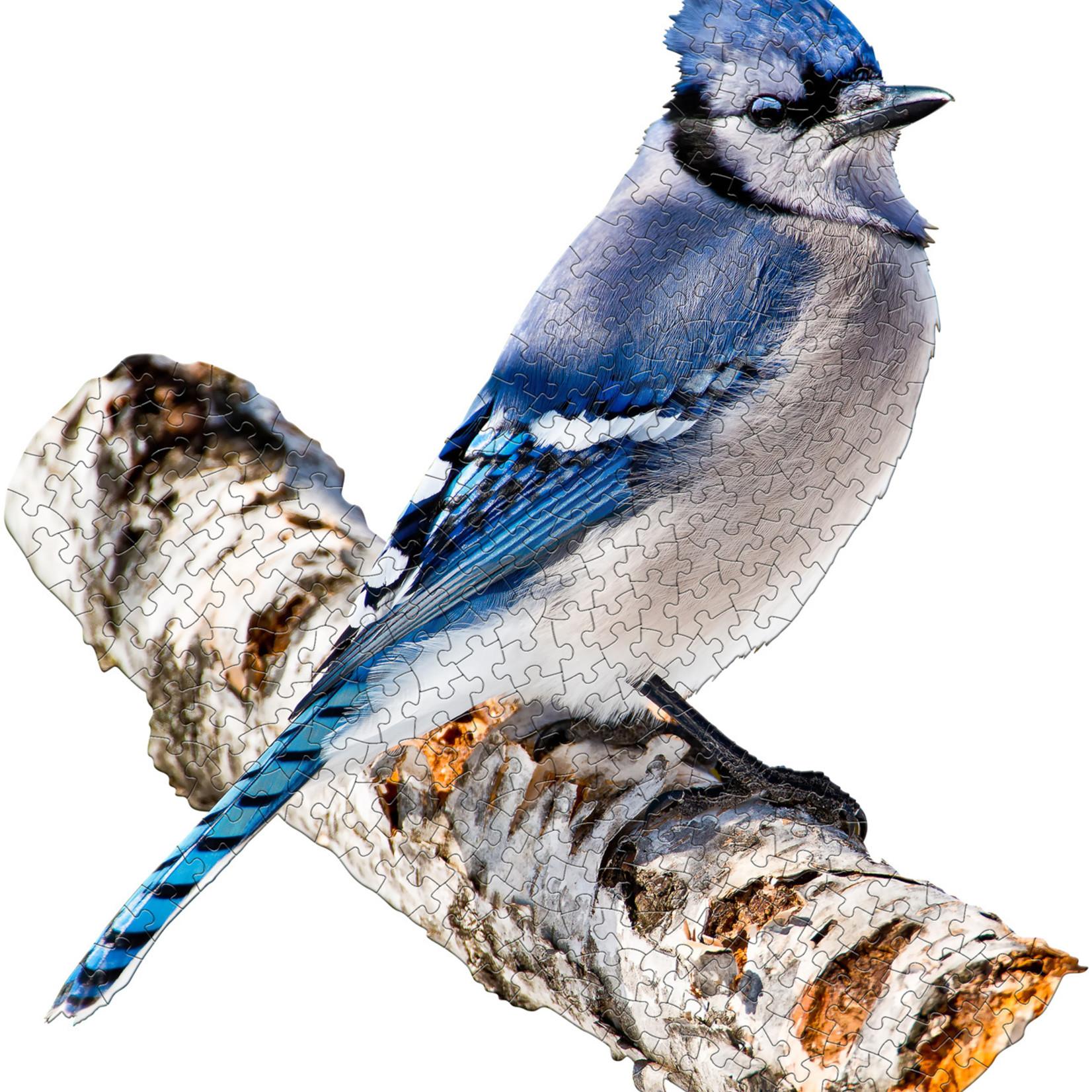 Madd Capp I Am Blue Jay - 300 pc