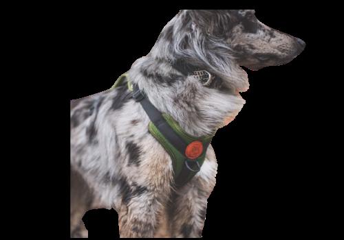Wilder Dog Wilder Dog Harness