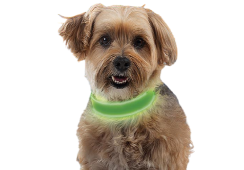 Nite Ize NiteDog Rechargeable LED Collar