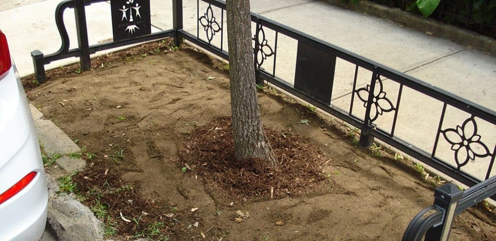 Stree tree pit with dry, compacted soil.