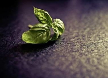 Herbs M-N-O